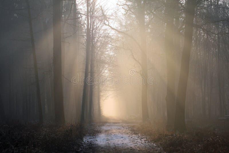 Fog, Forest, Mist, Atmosphere stock images