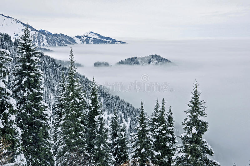 Fog and forest in the north tien shan stock image
