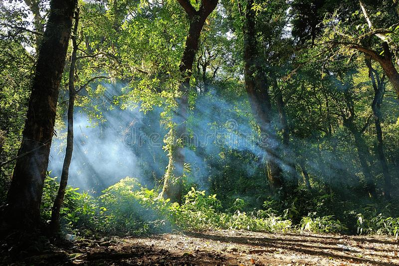 Fog in a forest stock photos