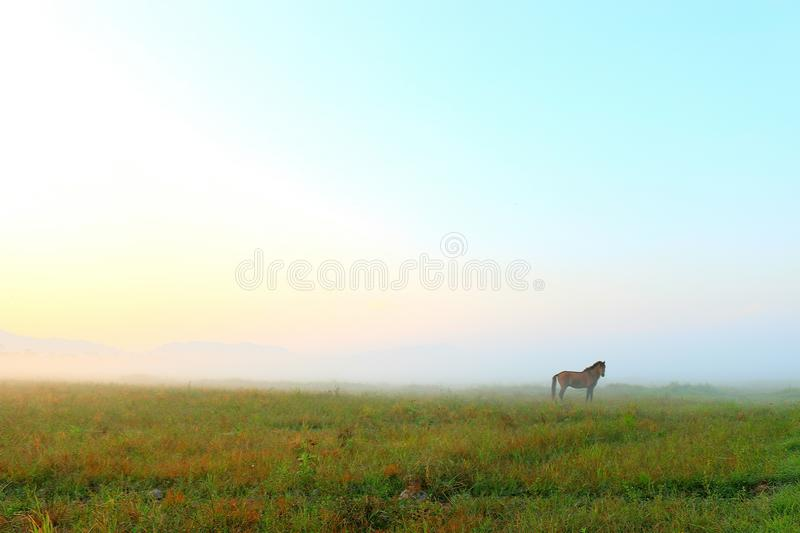 Fog and horse. A horse with creamy color fog on background stock images