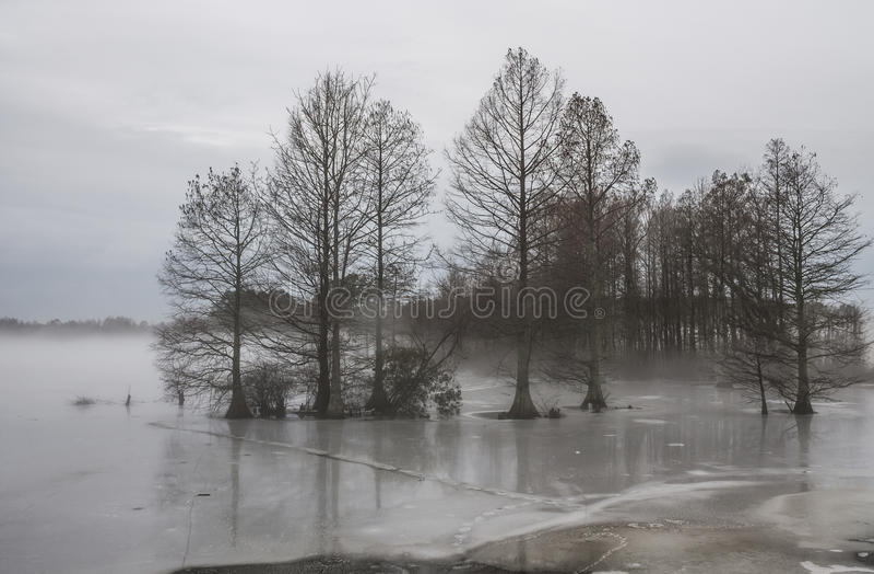 Fog and Ice at Stumpy Lake. In Virginia Beach, Virginia stock image