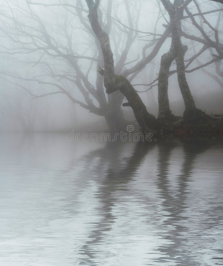 Free Fog In Forest Royalty Free Stock Photos - 3865168