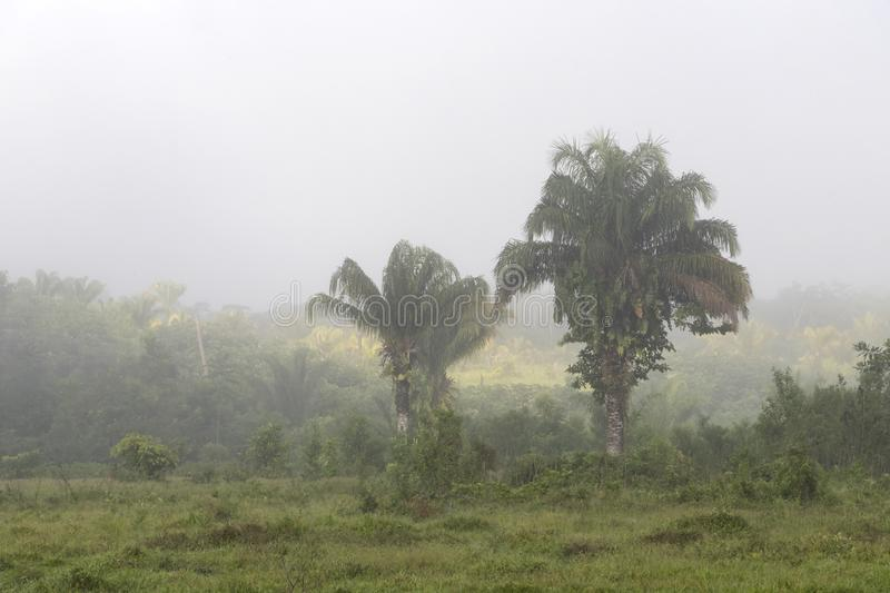 Fog at jungles farm in South America. Landscape with fog at jungle farm in South America, mysterious, travel, nature, background, adventure, forest, green, fun stock images