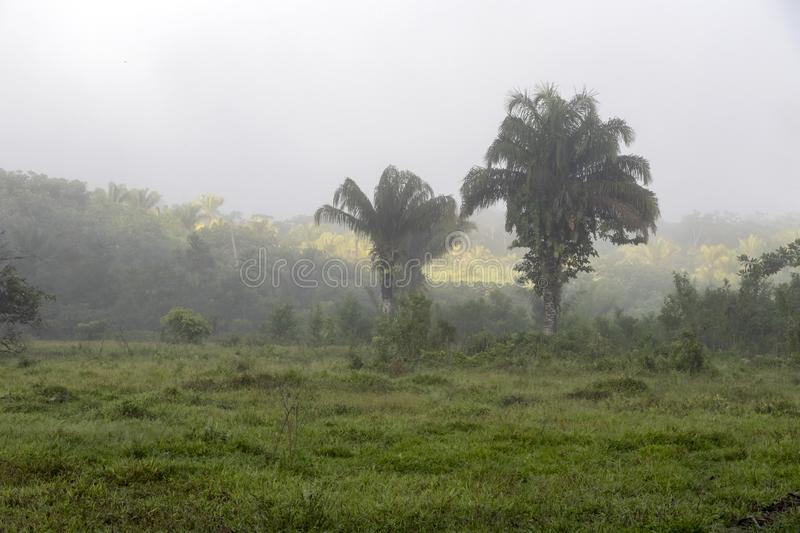Fog at jungles farm in South America. Landscape with fog at jungle farm in South America, mysterious, travel, nature, background, adventure, forest, green, fun royalty free stock photography