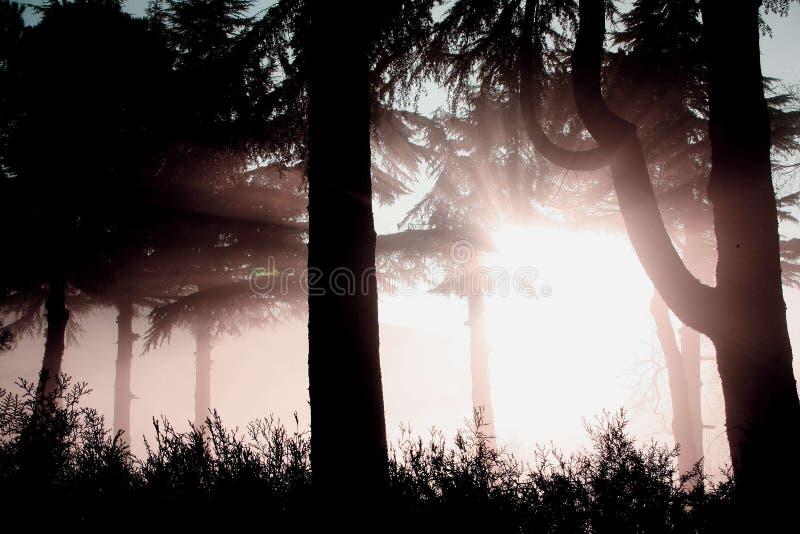 Fog landscape royalty free stock image