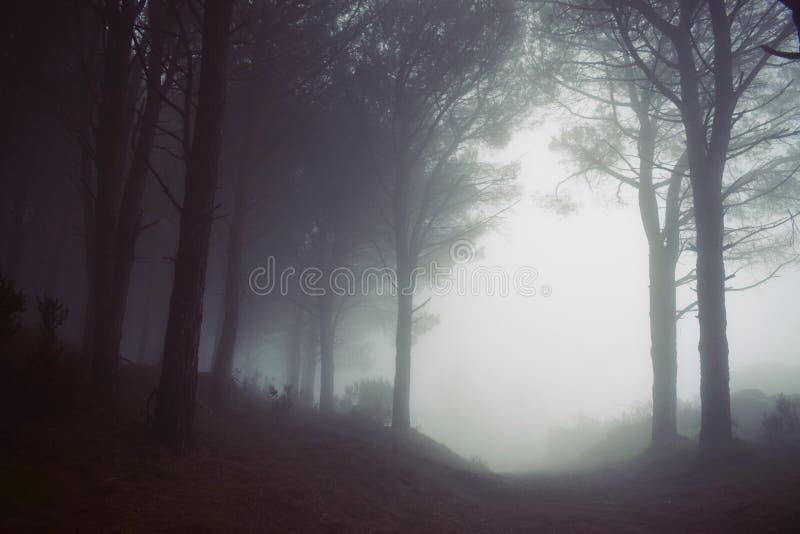 Fog, Mist, Forest, Atmosphere stock images