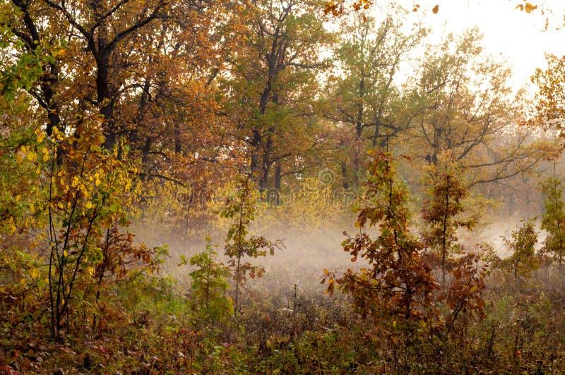Fog, mist, haze, smoke, brume, toman. Fog in autumn oak forest. Fog mist haze smoke brume toman. Fog in autumn oak forest. Misty morning in autumn forest royalty free stock photos