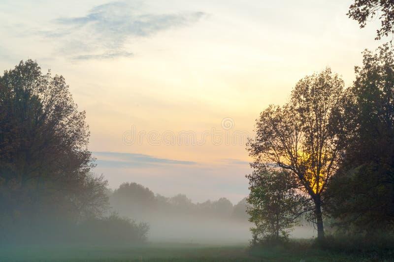 Fog, mist, haze, smoke, brume, toman. Fog in autumn oak forest. Fog mist haze smoke brume toman. Fog in autumn oak forest. Misty morning in autumn forest stock photos