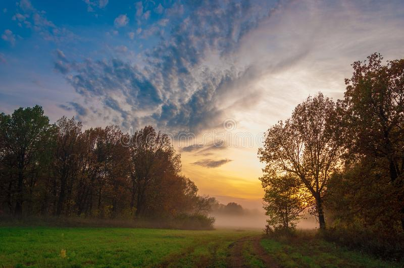 Fog, mist, haze, smoke, brume, toman. Fog in autumn oak forest. Fog mist haze smoke brume toman. Fog in autumn oak forest. Misty morning in autumn forest royalty free stock photography