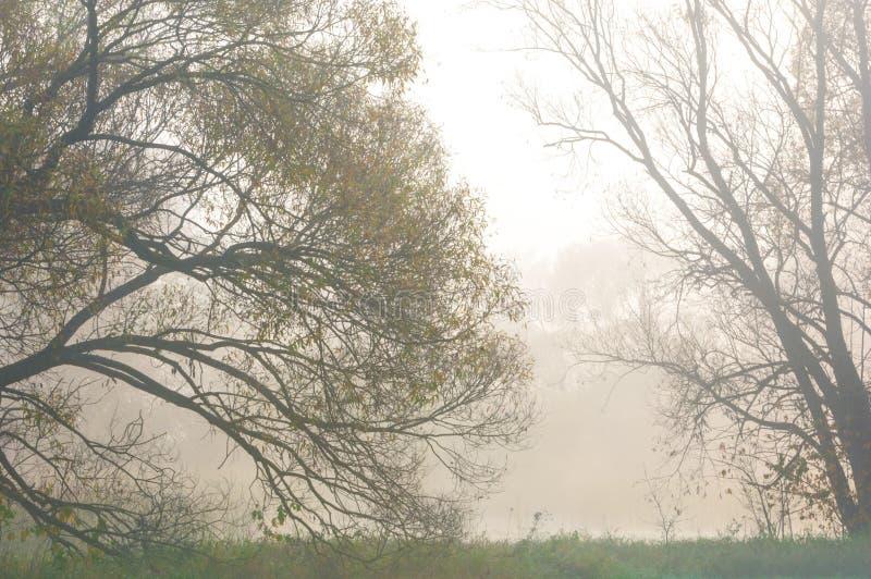 Fog, mist, haze, smoke, brume, toman. Fog in autumn oak forest. Fog mist haze smoke brume toman. Fog in autumn oak forest. Misty morning in autumn forest stock image