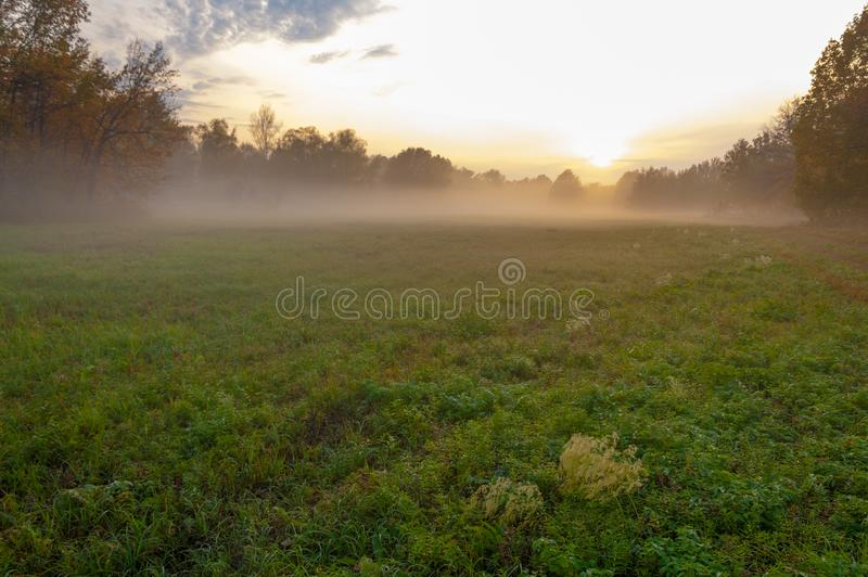 Fog, mist, haze, smoke, brume, toman. Fog in autumn oak forest. Fog mist haze smoke brume toman. Fog in autumn oak forest. Misty morning in autumn forest stock photo