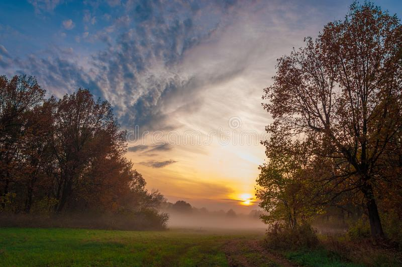 Fog, mist, haze, smoke, brume, toman. Fog in autumn oak forest. Fog mist haze smoke brume toman. Fog in autumn oak forest. Misty morning in autumn forest royalty free stock photo