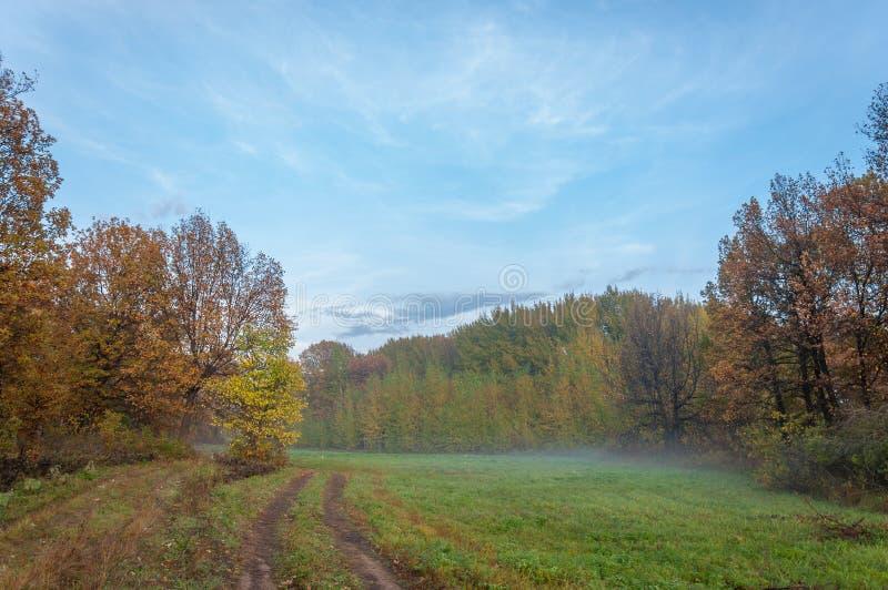 Fog, mist, haze, smoke, brume, toman. Fog in autumn oak forest. Fog mist haze smoke brume toman. Fog in autumn oak forest. Misty morning in autumn forest stock images