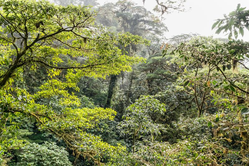 Fog and mist in the jungle as seen from a canopy bridge. In Mistico Park Costa Rica royalty free stock photo