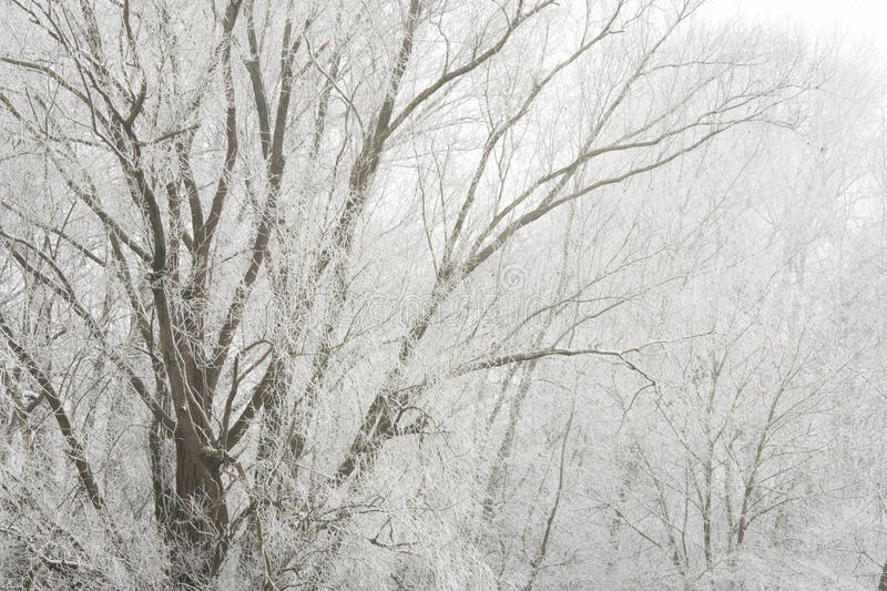 Download Fog in the morning stock photo. Image of background, frost - 12722216