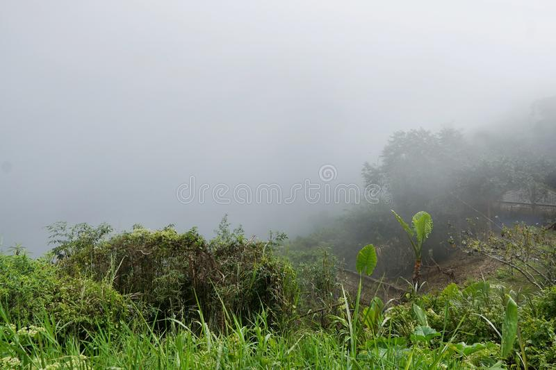 Fog in the morning at Mon Cham. Fog in the morning at Mon Cham, Thailand, abundance evergreen forest and foggy, Space for text in template, Travel and stock photos