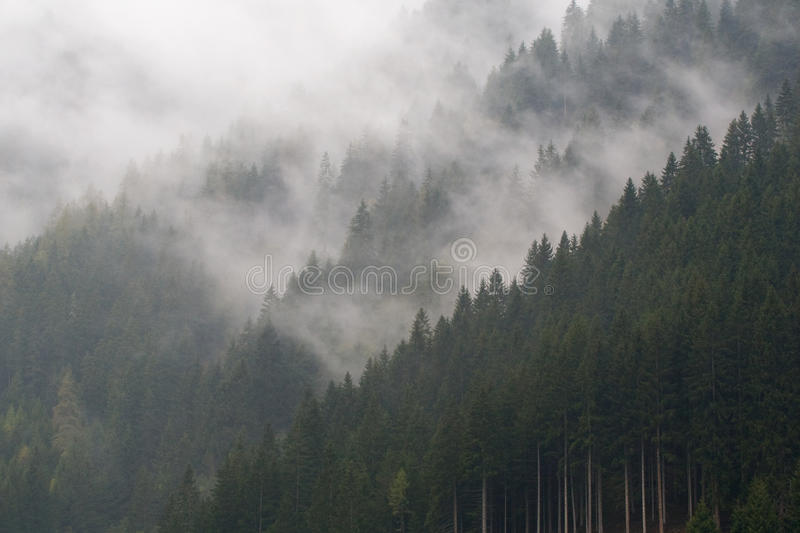 Fog in mountain forest stock photography