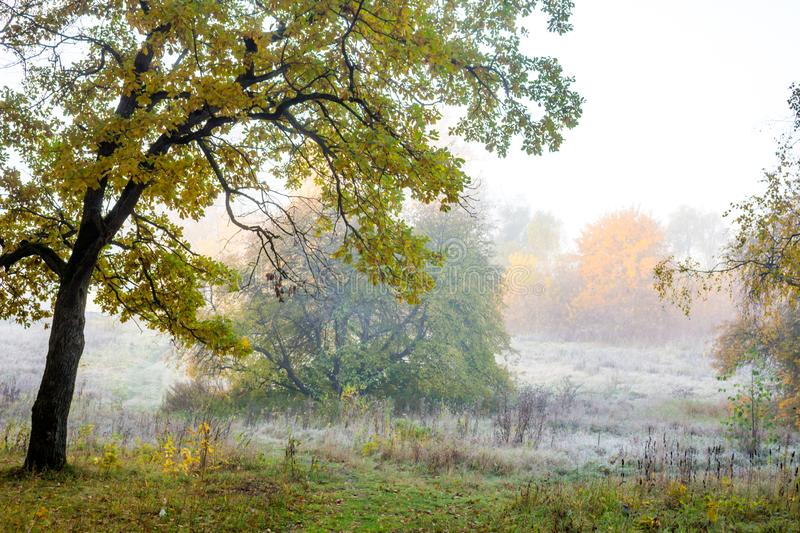 Fog on nature in the cold morning. Autumn in November stock photo