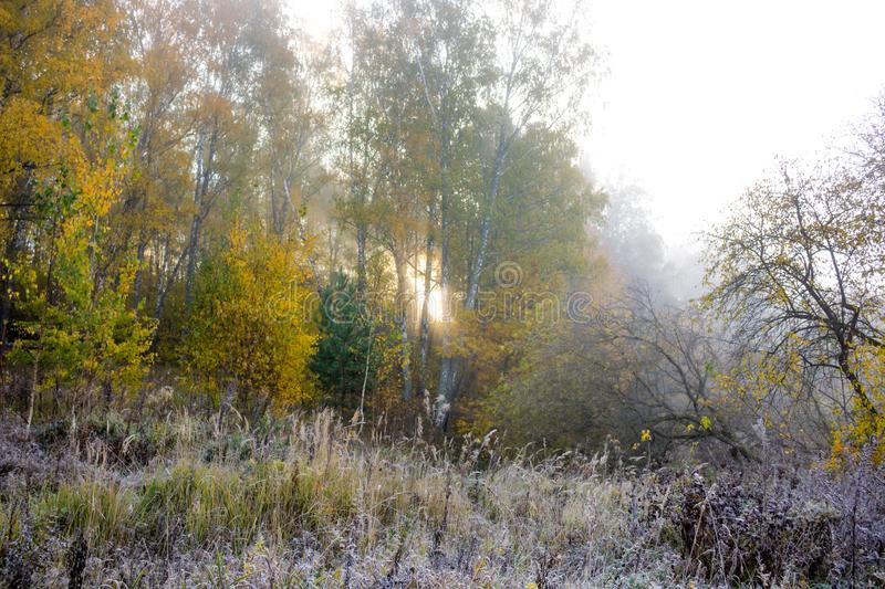 Fog on nature in the cold morning. Autumn in November royalty free stock photos