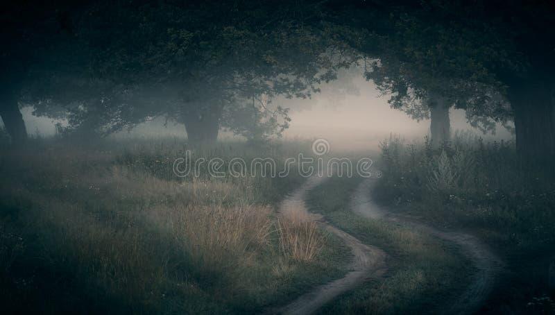 Fog in the oak grove stock photography
