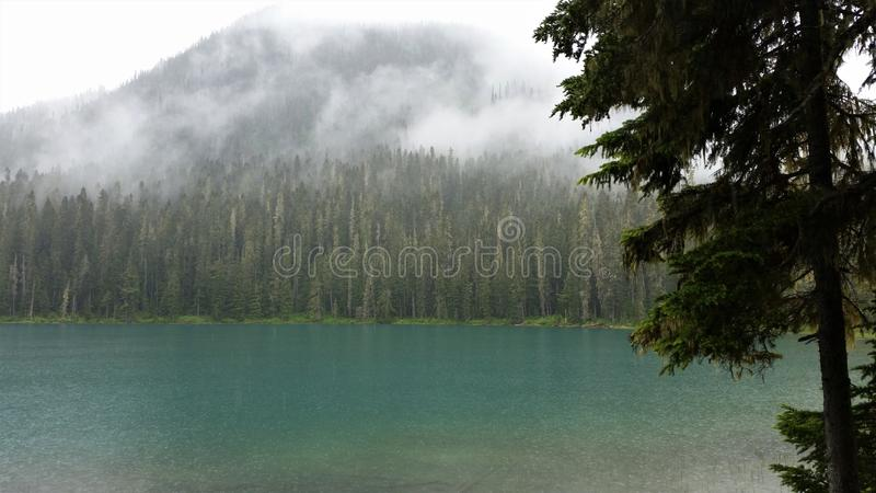 Fog obscures the mountains behind the evergreens at Jasper Lake, Alberta royalty free stock image