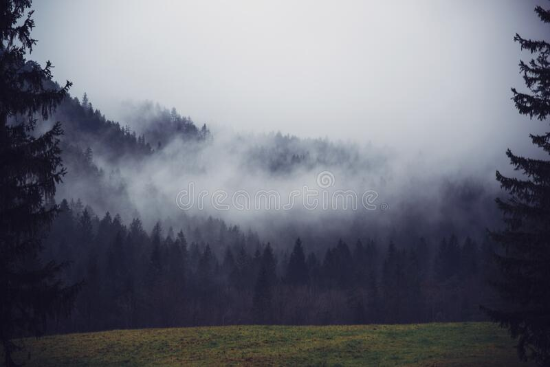 Fog Over a Forest royalty free stock images