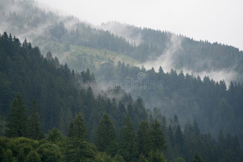 Fog over the forest in the mountains royalty free stock photo