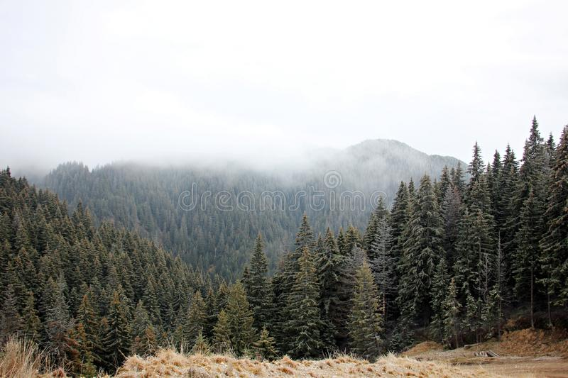 Foggy forest in the mountains royalty free stock photography