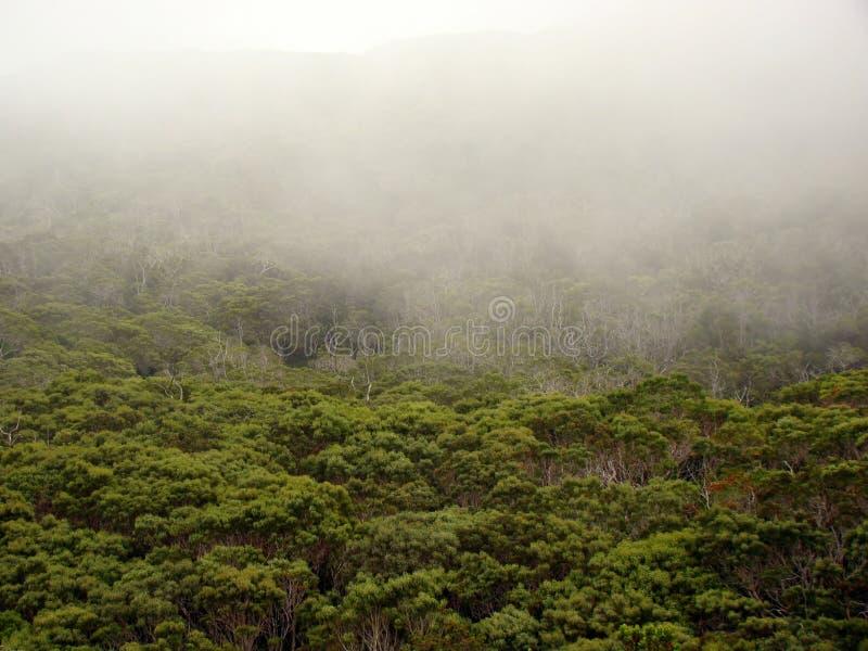 Fog over the forest, Waimea Canyon, Kauai, HI royalty free stock images