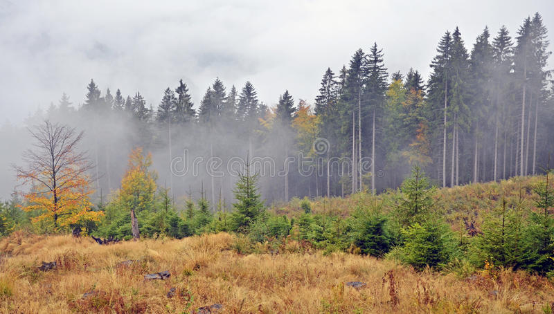 Fog over pine stock photography