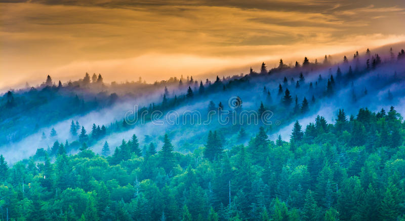 Fog over pine trees at sunrise, seen from Devil's Courthouse, ne. Ar the Blue Ridge Parkway in North Carolina royalty free stock image
