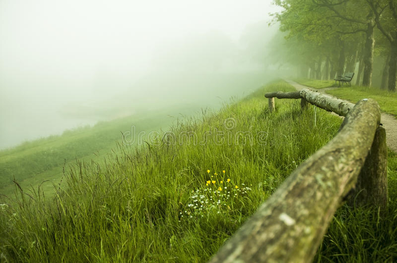 Fog in a park royalty free stock photo