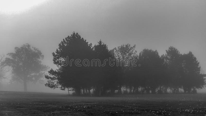 Fog in a park stock photography