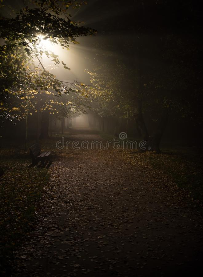 Fog in the park, night, soft focus, high iso, royalty free stock photo