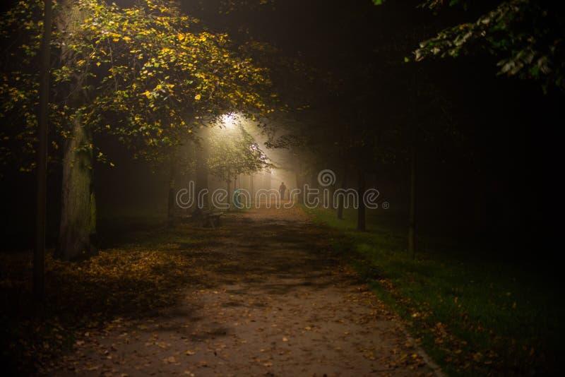 Fog in the park, night, soft focus, high iso, stock photos
