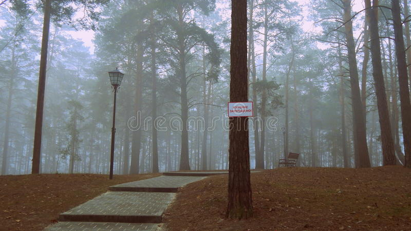 Fog in the park zone royalty free stock images