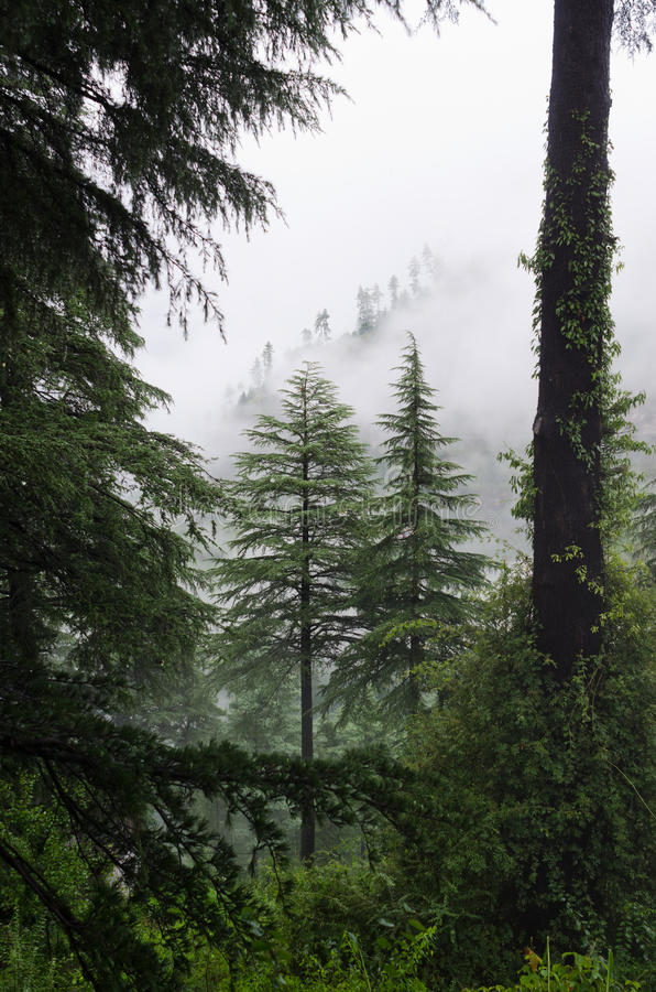 Fog after rain in wild forest stock image