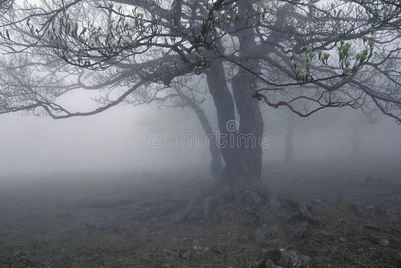 Download Fog's tree stock image. Image of evening, isolation, haze - 607817