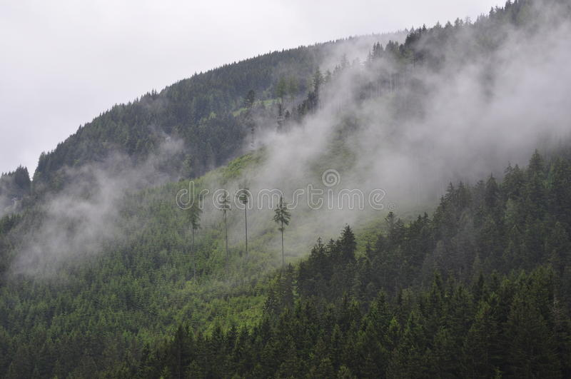Download Fog on Side of Mountain stock photo. Image of free, nature - 83017712