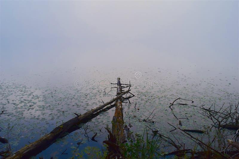 Fog, Sky, Water, Mist stock photo