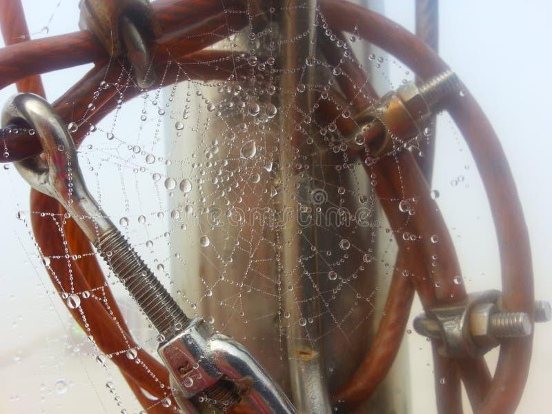 Fog&spiderweb royaltyfria bilder