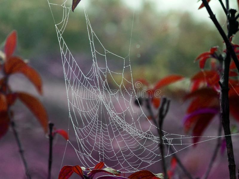 Fog on spiderweb on leap and tree on an early winter morning stock photos