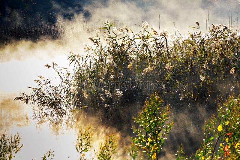Fog with sun light frosty morning on the river. Fog with sun light at frosty morning on the river, autumn, background, beautiful, countryside, dawn, environment royalty free stock photo