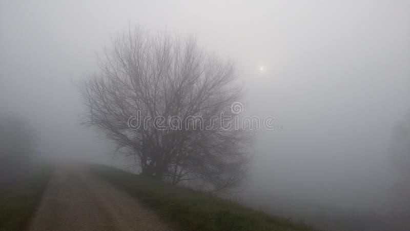 Fog and sun stock photo