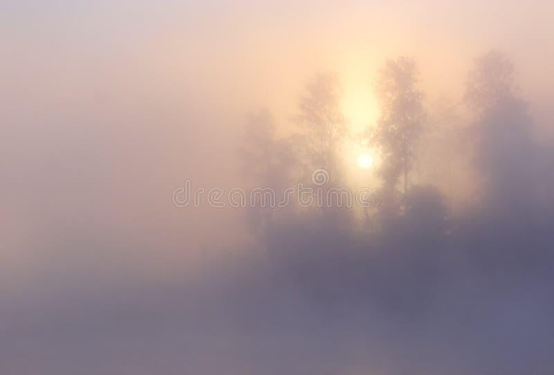Download Fog Sunrise Trees stock photo. Image of light, copy, mist - 28753330