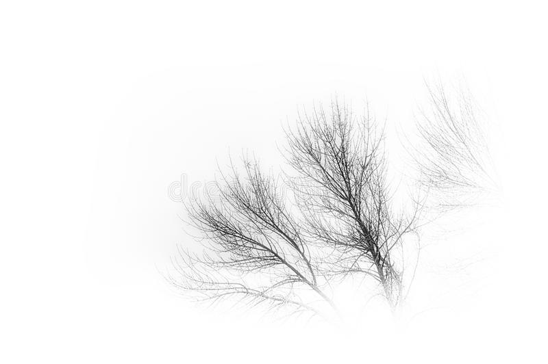 Fog and tree branches royalty free stock photo