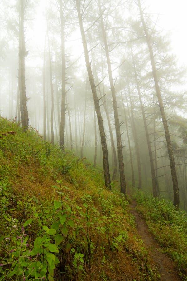 Fog and tree royalty free stock photo