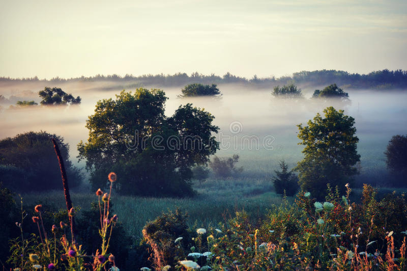 Fog. Trees and flowers down in a valley with lingering morning fog hovering in between the trees in Lake Geneva, Wisconsin royalty free stock photo