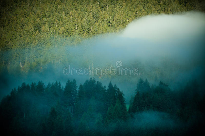 Download Fog In A Wood Of Dolomites Mountains, Italy Stock Photo - Image: 26295900