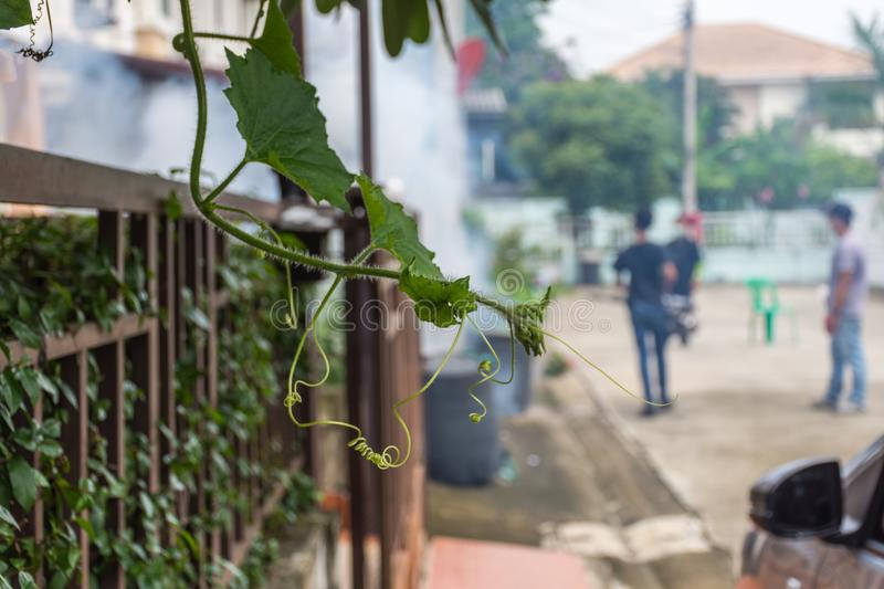 Fogging DDT spray mosquito kill for virus protect. Bangkok, Thailand - July 3, 2016 : Unidentified people fogging DDT spray for mosquito kill and protect by stock photo